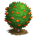 tree_general_calamondin_generic_icon-4edc367bf53b096aead2a8ce4d0d435a.png (128×128)