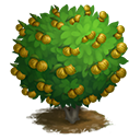 tree_general_lemon_eurekapink_icon-ba0c1c8837dbce614b916859dd7262ee.png (128×128)