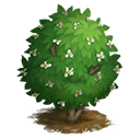 tree_general_snowball_japanese_icon-a6267f22451ddde36c01f8e5d88e6932.png (128×128)