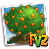 Nugget Apricot Tree