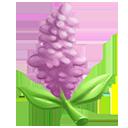 Pink Vitex Tree